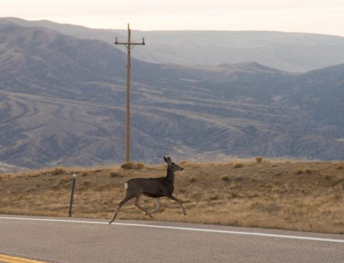 Safe Driving Tips for Arizona Deer Season